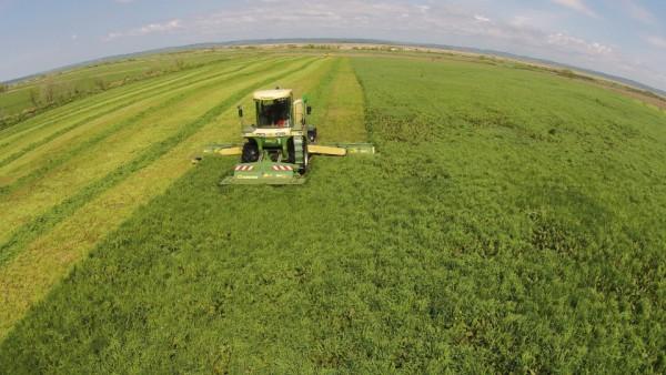 1番サイレージ収穫作業スタート
